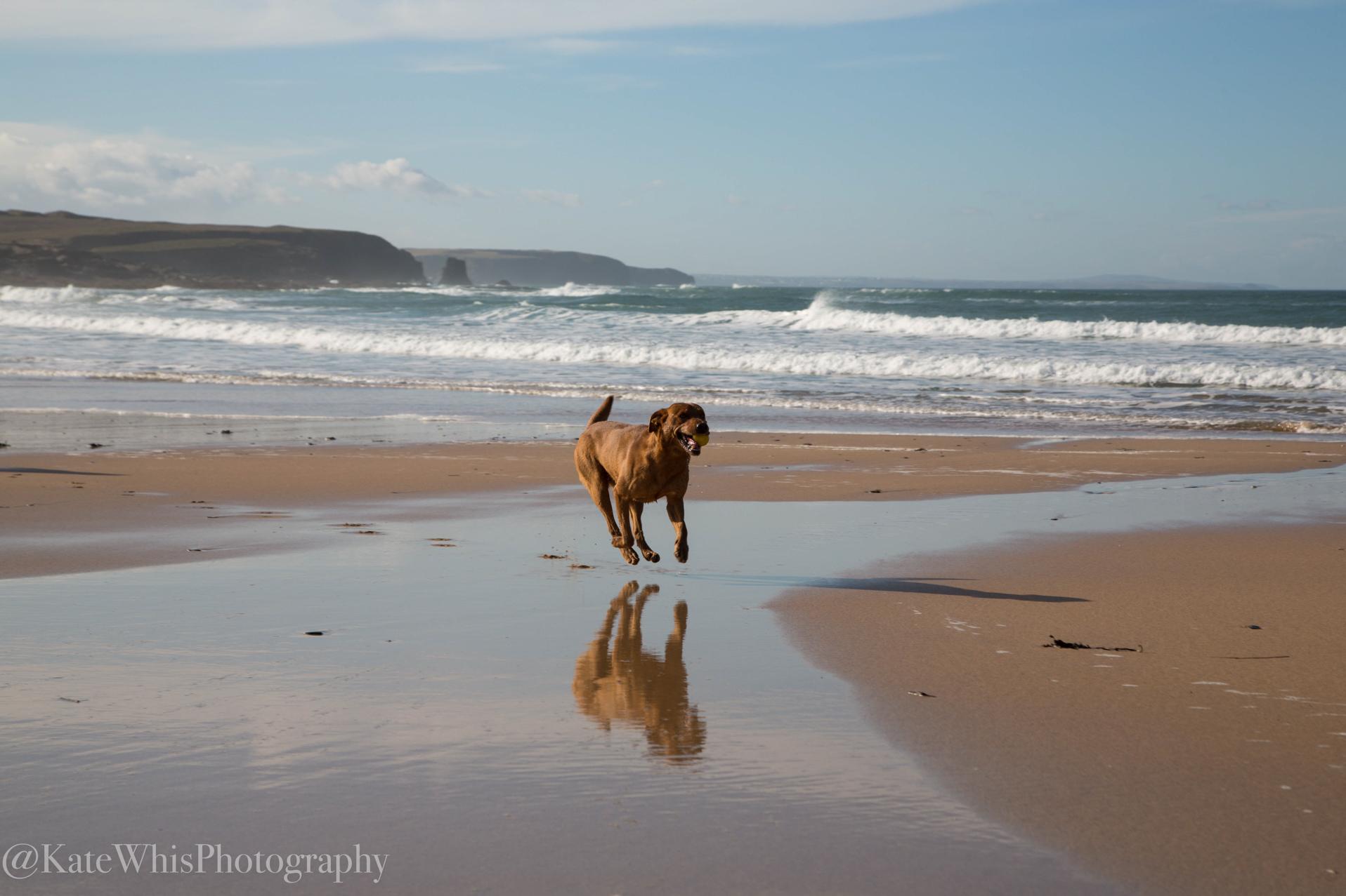 dog running on Constantine Bay beach