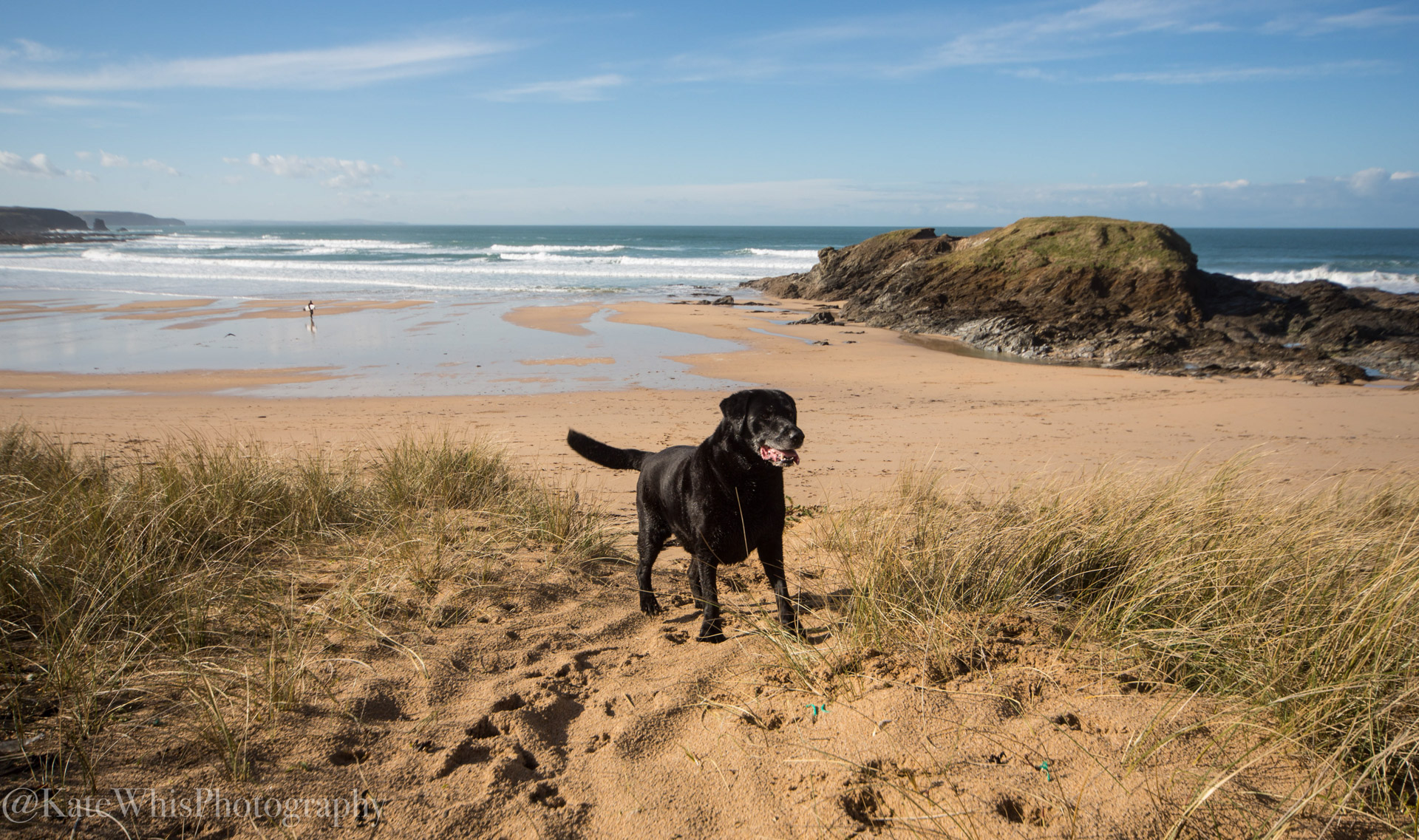 Dog in the dunes at Constantine Bay