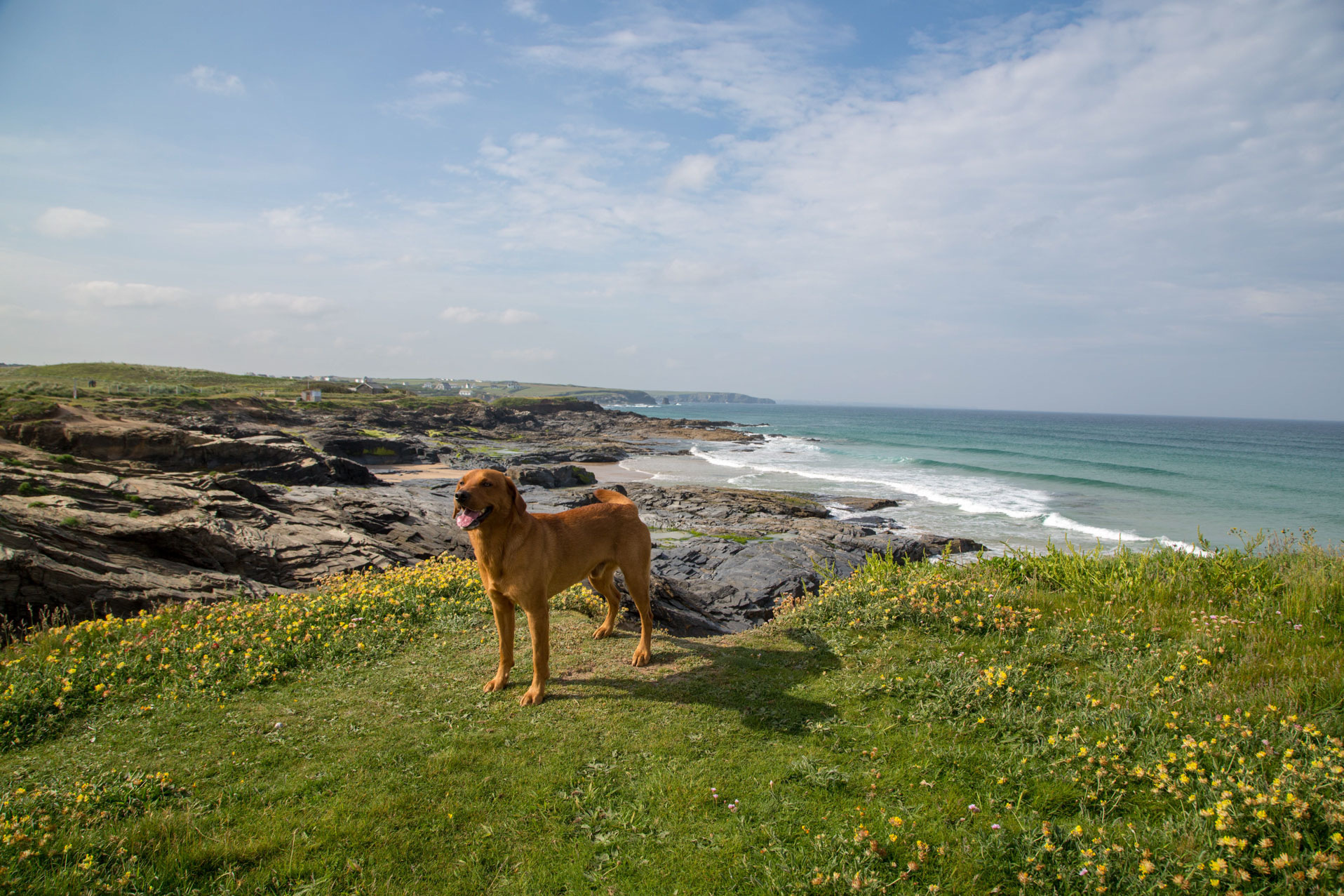 Dog standing on the cliffs at Booby's Bay