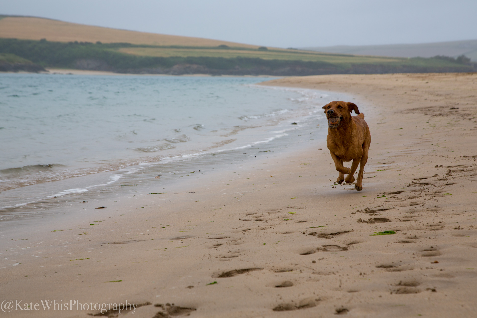 Dog running on the beach at Rock
