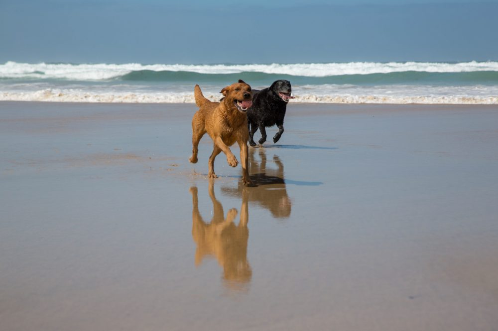 Dogs running on the beach during a photo shoot