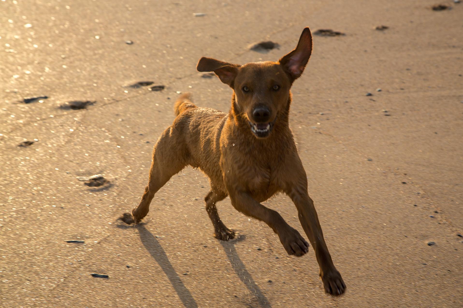 Dog on a Rock beach