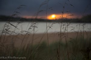 moody sunrise through grass