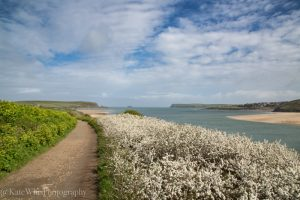 The path to Tregirls from Padstow
