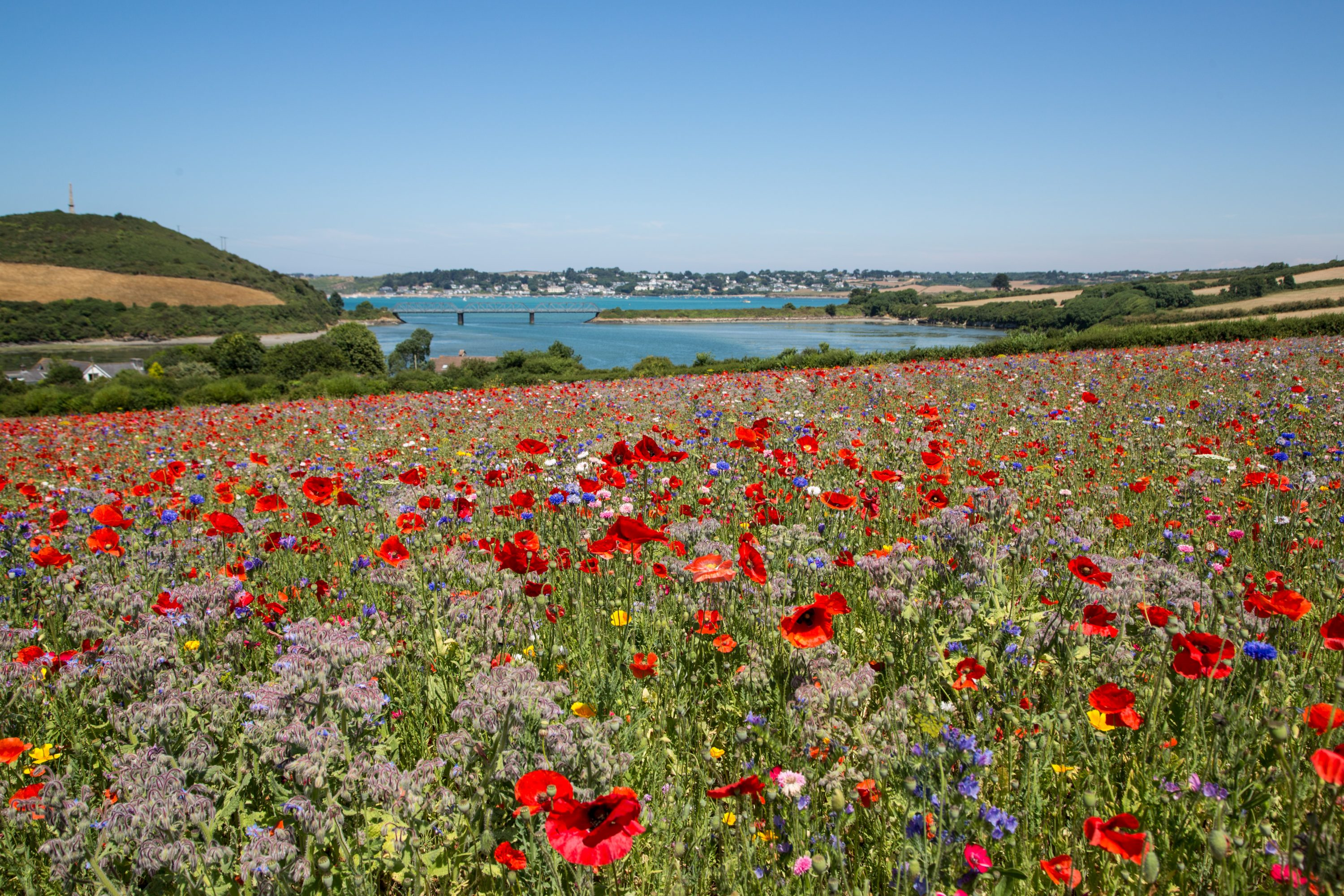 A field of poppies overlooking the iron bridge