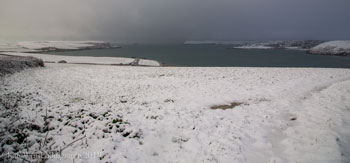 Camel estuary in the snow