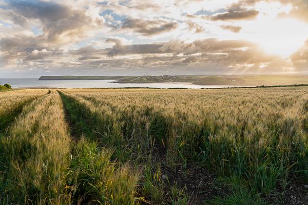 Sunrise over the barley