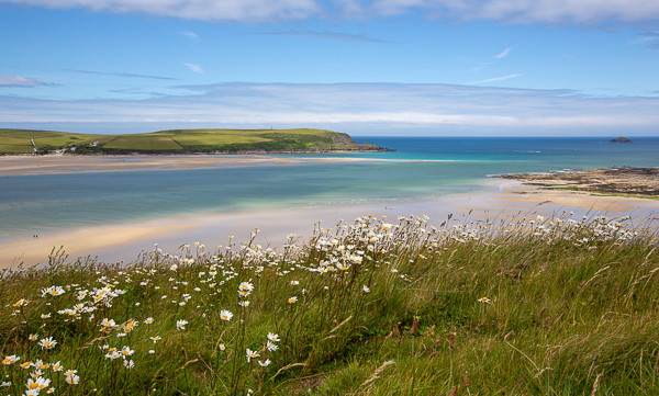 Daisies above Daymer Bay